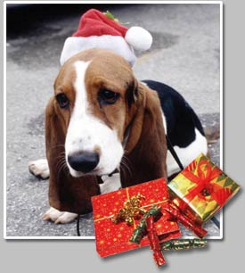 Presents 4 Pets – To benefot the Southern Hope Humane Society